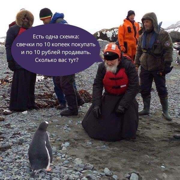 Гундяев и его пингвины: патриарх Кирилл в Антарктиде стал героем фотожаб