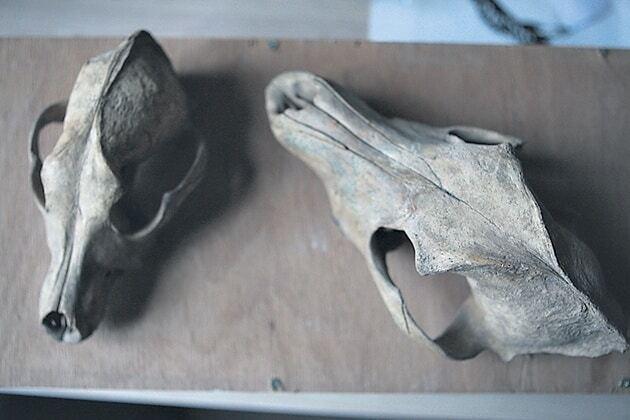 Раскопки Почтовой площади в Киеве: археологи показали новые находки