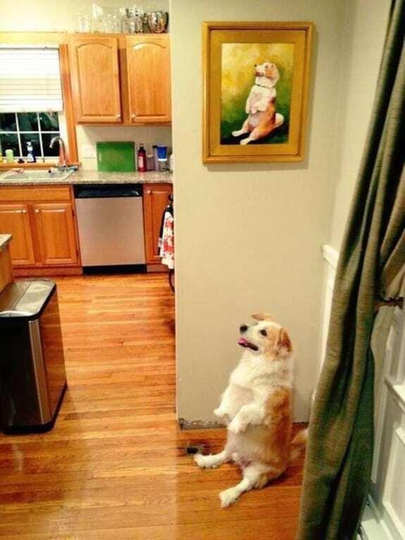 30 нереально смішних фото, зроблених в найпотрібніший момент