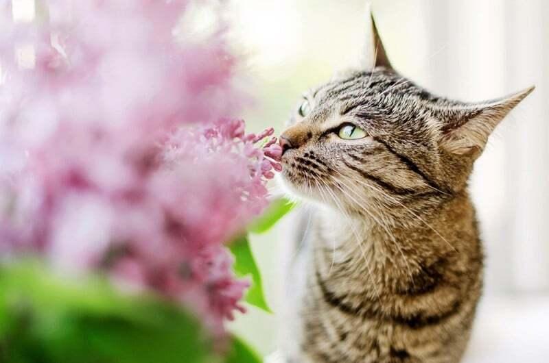Кошка нюхает цветок картинка
