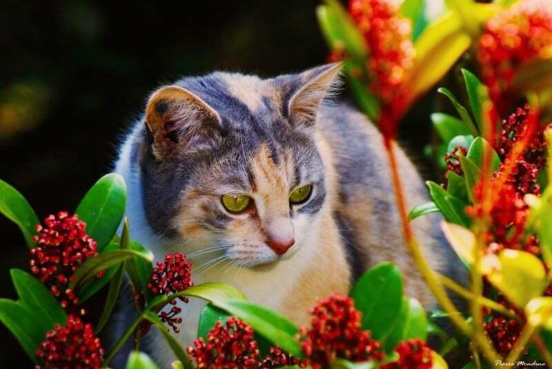 Кошка нюхает цветы картинки