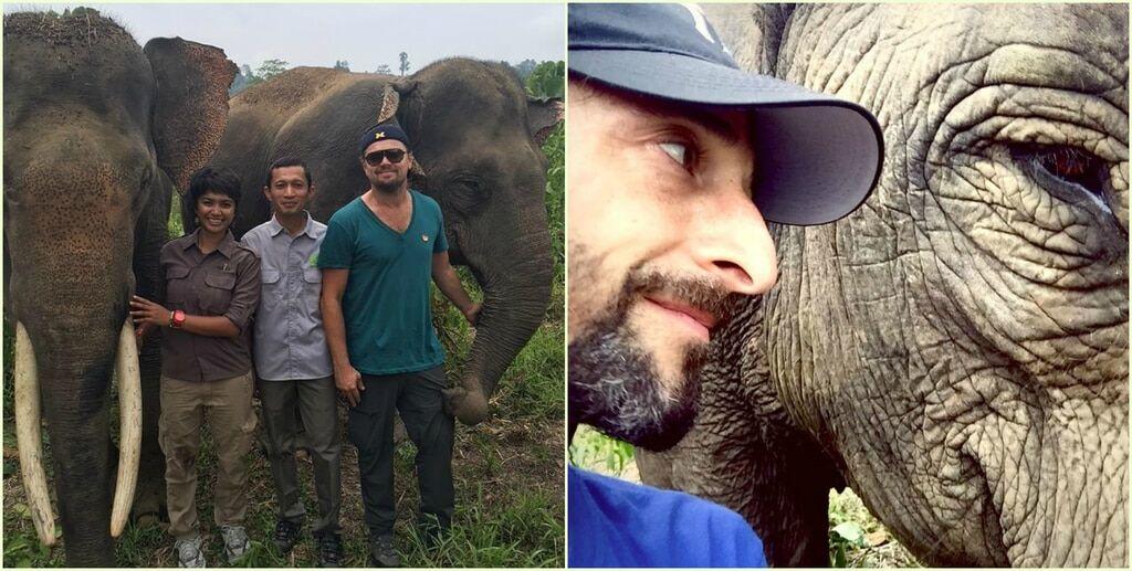 Коллеги-филантропы: ДиКаприо и Броуди посетили остров Суматра