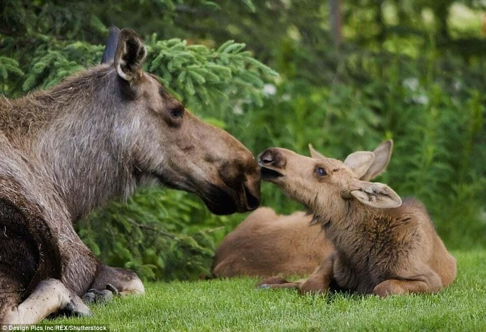 Куражные фото животных