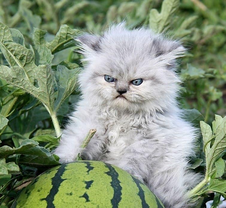 Топ-18 фото смешных животных, которые вне себя от гнева