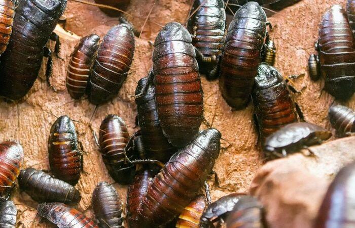 Скунс, мини-ослик и тарантул: топ-15 самых экзотических домашних питомцев