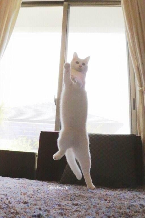 В Японии появилась первая кошка-балерина