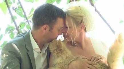 Весілля у розпліднику: пара з Канади одружилася в компанії тисячі котів