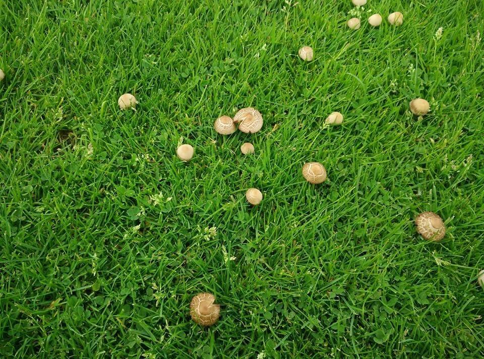 Стыд и позор: на стадионе клуба Премьер-лиги выросли грибы