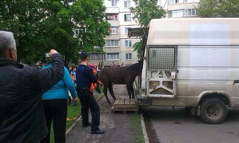 У Харкові поліція врятувала коня від загибелі