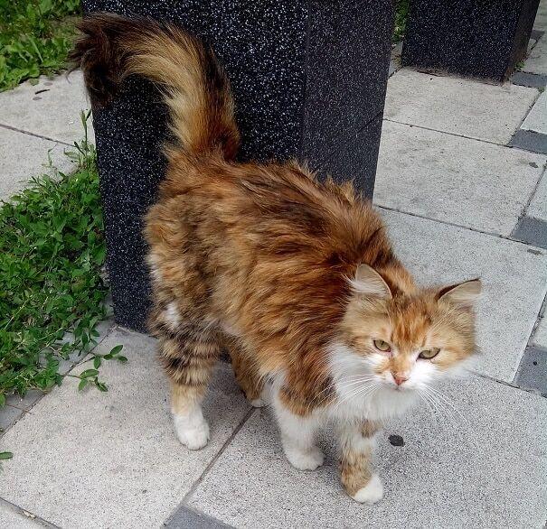 У Києві кішка йшла 30 днів, щоб повернутися додому