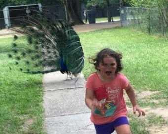 Пугливая девочка рассмешила сеть: опубликованы забавные мемы