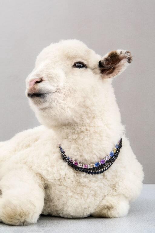 Гламурні зоомоделі: тварини з ферми приміряли дорогоцінні прикраси