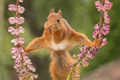 У стилі Ван Дамма: білка в шпагаті розсмішила мережу