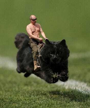 Покемон для Путина: в России кот на футбольном поле стал новым мэмом