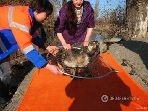 Команда спасения животных: мы выручали из беды оленя на стадионе, аиста на Майдане, котов на карнизах