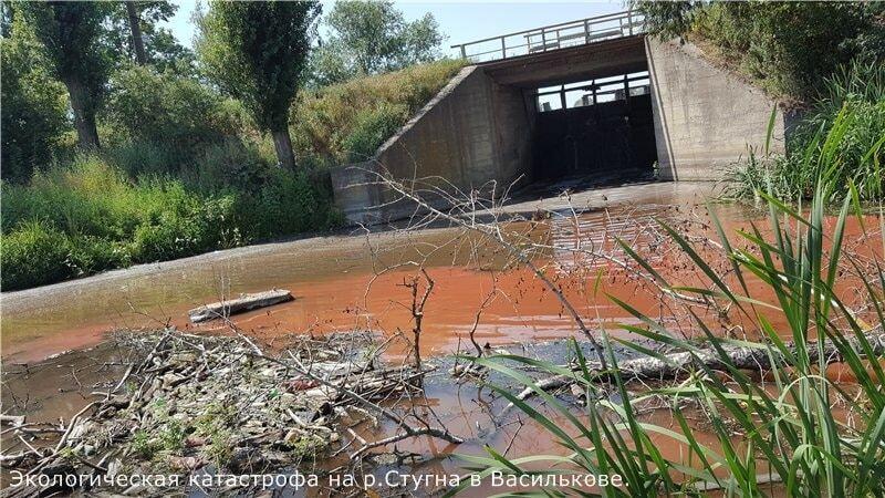 Экокатастрофа на Киевщине: в реке покраснела вода, массово вымерла рыба