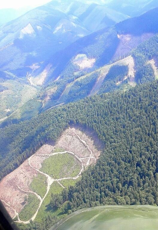 Экоцид Карпат: на Львовщине провели массовые обыски у работников лесхозов