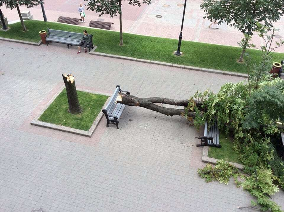 В Киеве на Крещатике рухнул огромный каштан