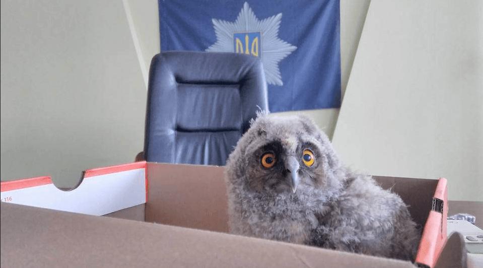 Гроза бандитов Николаевна: в Ривне полицию усилили патрульной совой