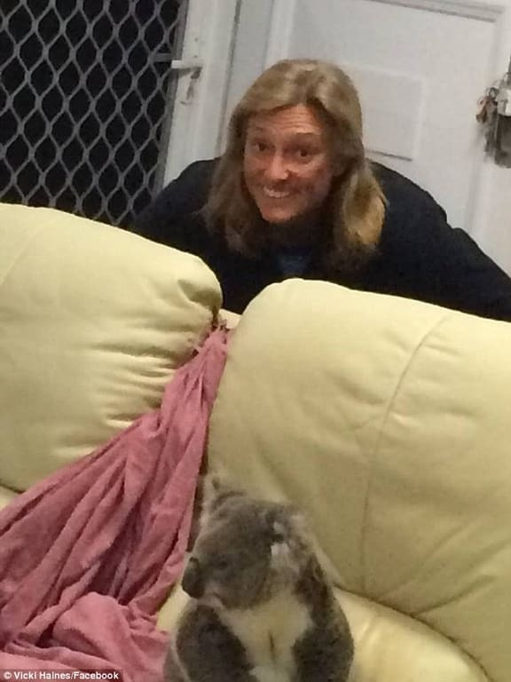 Чувствуй себя, как дома: австралиек удивил пушистый гость, тайком проникший в дом