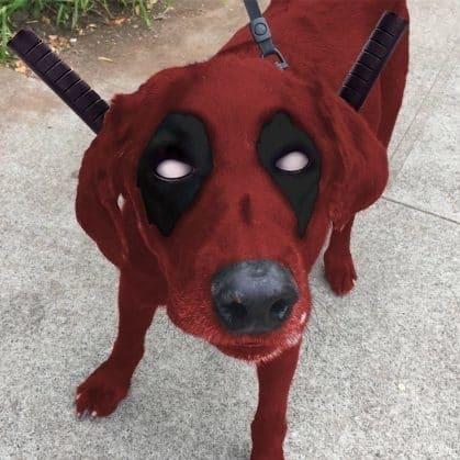 Любители фотошопа сделали из больного пса супергероя