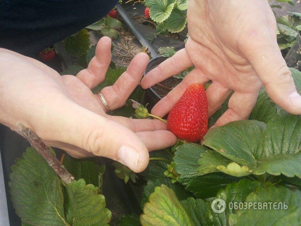 Приємне з корисним: як в Україні створили прибуткову органічну ферму