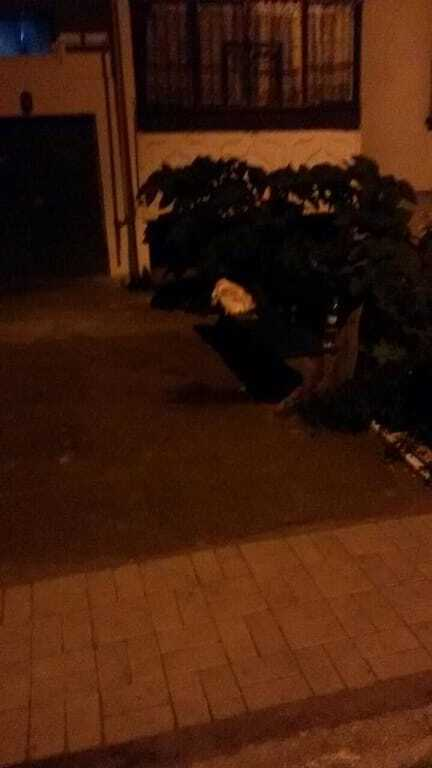 Убит 8-месячный ребенок: в Павлограде мужчина устроил публичную расправу над семьей