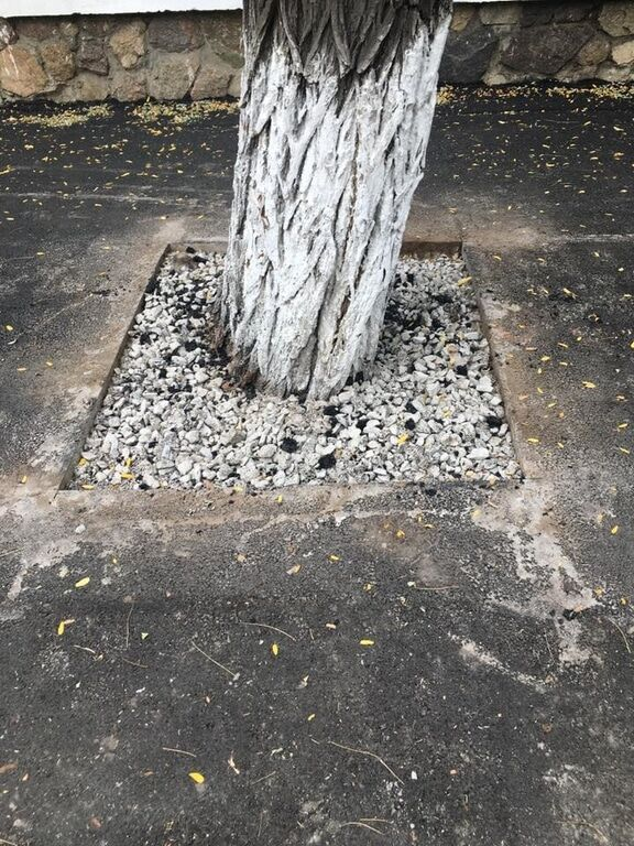 В Новой Каховке деревья закатали в асфальт, огласка помогла
