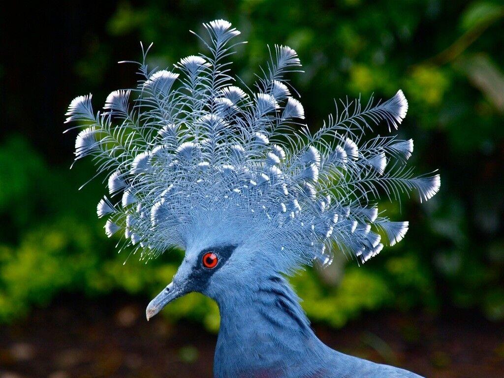 красота птиц фото и названия операция, которая