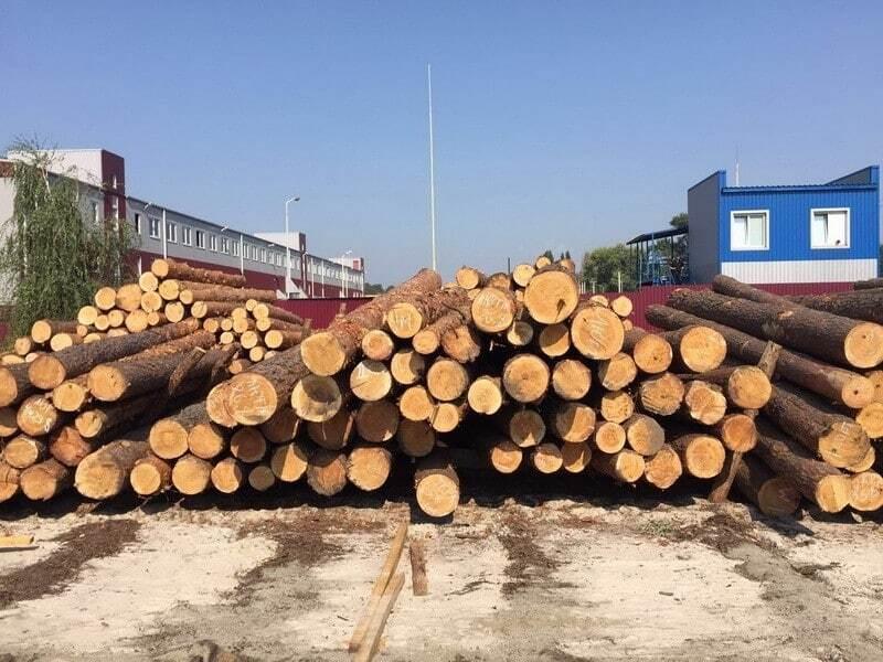 СБУ раскрыла масштабные махинации с экспортом леса