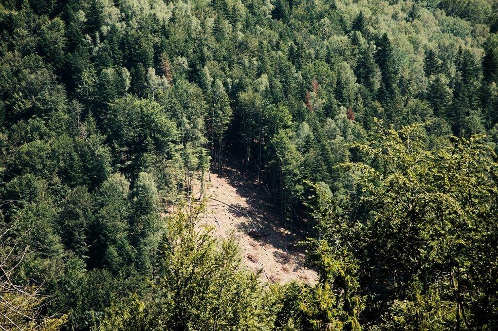 вырубка карпатских лесов фото всегда рядом, буду