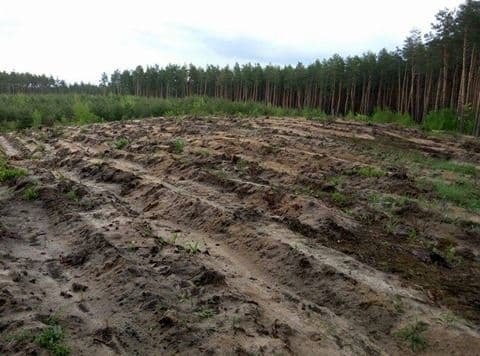 """Величезні """"лисі"""" ділянки: з'явилися фото масштабної вирубки лісу на Київщині"""
