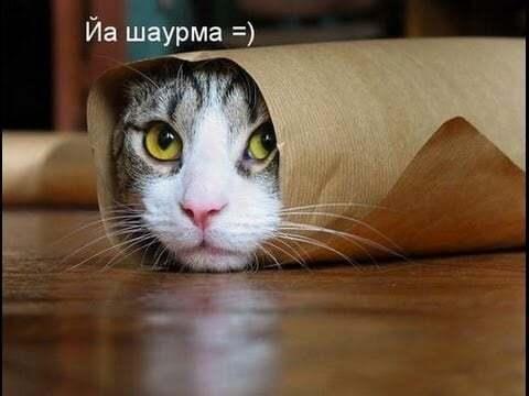 Всесвітній день кішок: топ-10 найсмішніших фото хвостатих улюбленців