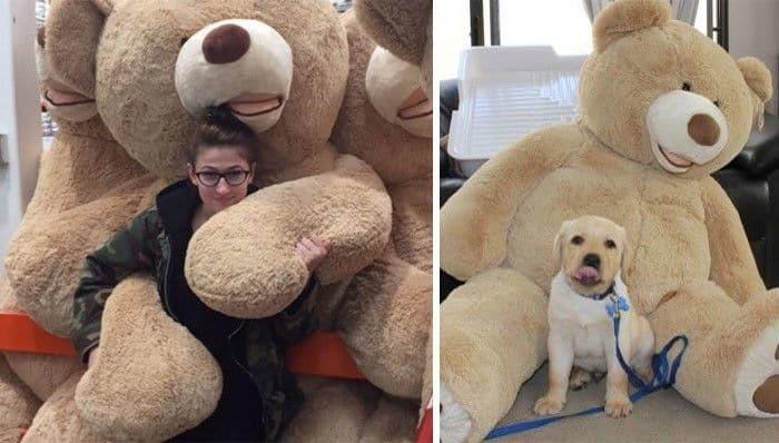 Какая ты собака: пользователям соцсетей подбирают забавных двойников по фото