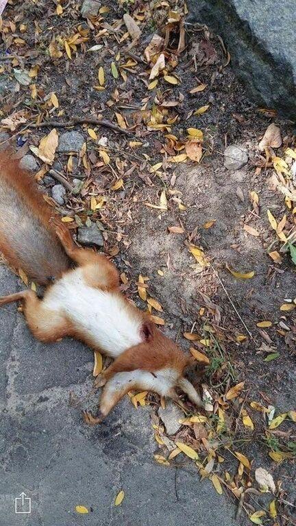 Cтрелял профи: в киевском парке нашли 10 убитых белок - соцсети