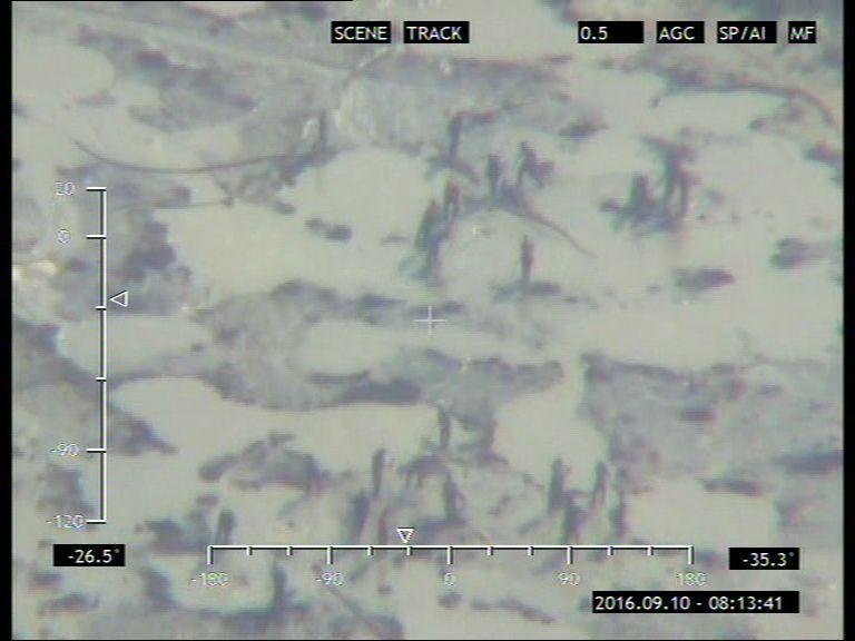В Україні виявили нові місця незаконного видобутку бурштину
