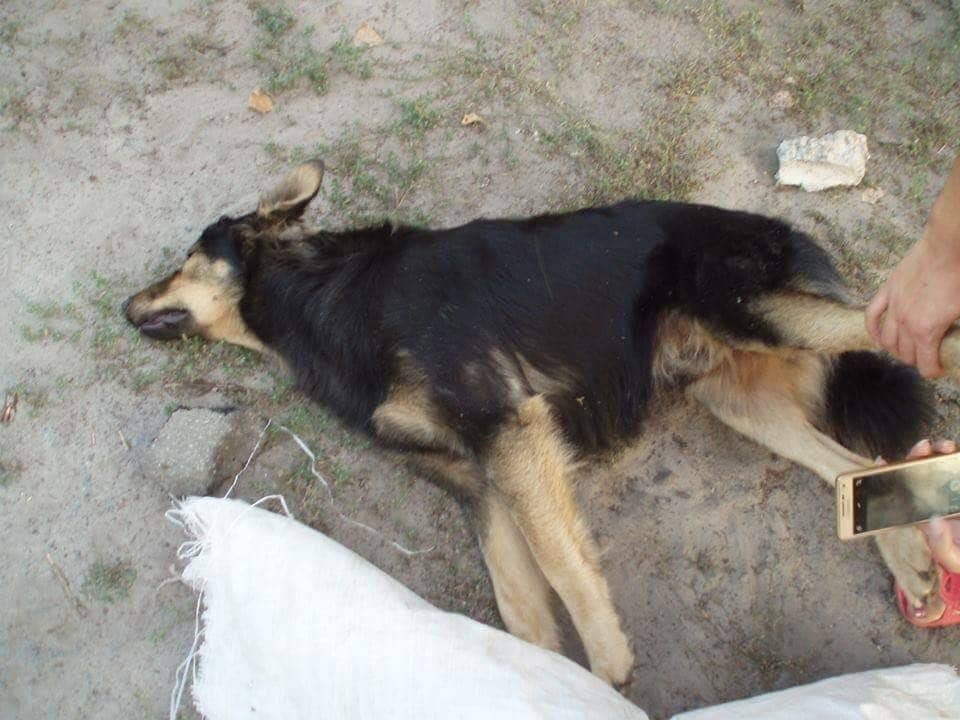 У Києві невідомі жорстоко вбили собак: поліція завела справу
