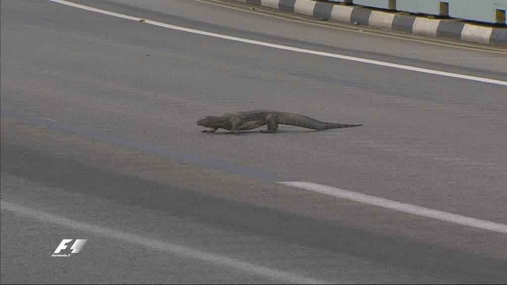 """На трасу Формули-1 під час змагань вибіг """"динозавр"""""""