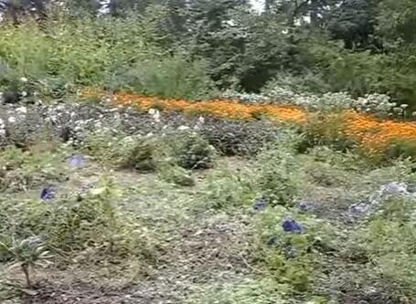 """У київському ботсаді відкрили """"Сад ароматів"""""""