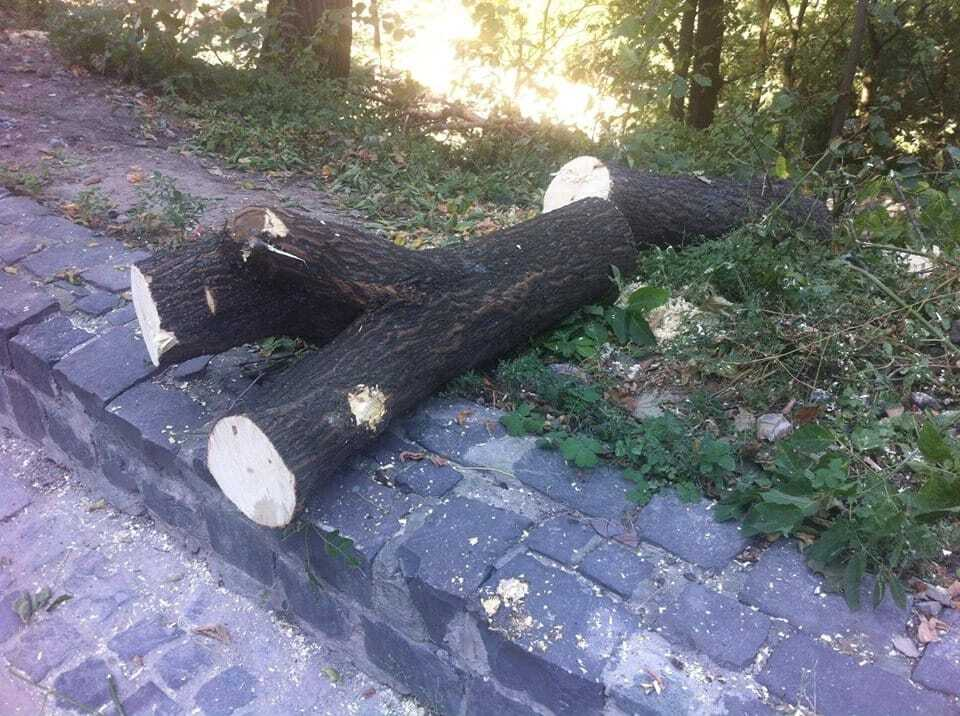 В Киеве возле Пейзажки вырубили более 150 деревьев