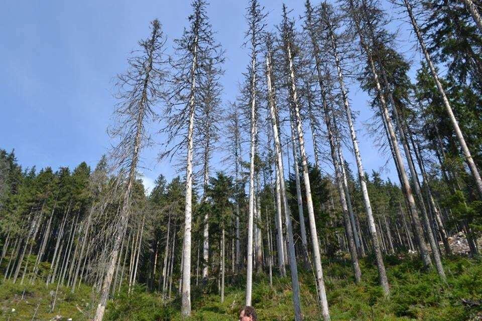 Ліс і жінка