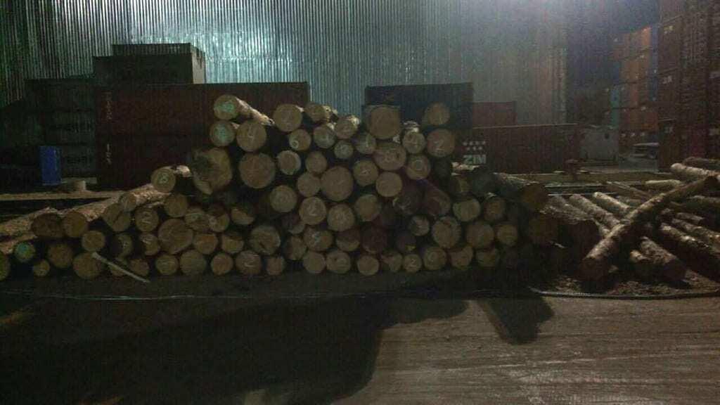 Незаконний експорт лісу: на Одещині суд заарештував майно одного з підприємств