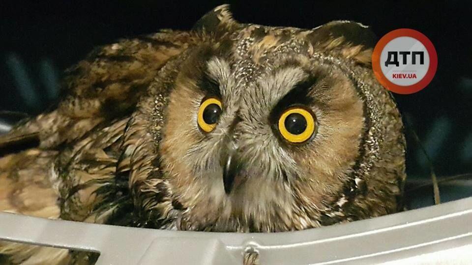 Забота о братьях меньших: в зоне АТО бойцы спасли красавицу-сову