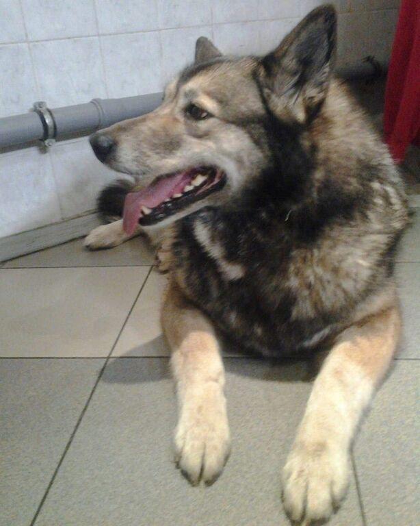 Ненавязчиво ждала помощи: в сети рассказали о необычном пациенте в киевской больнице