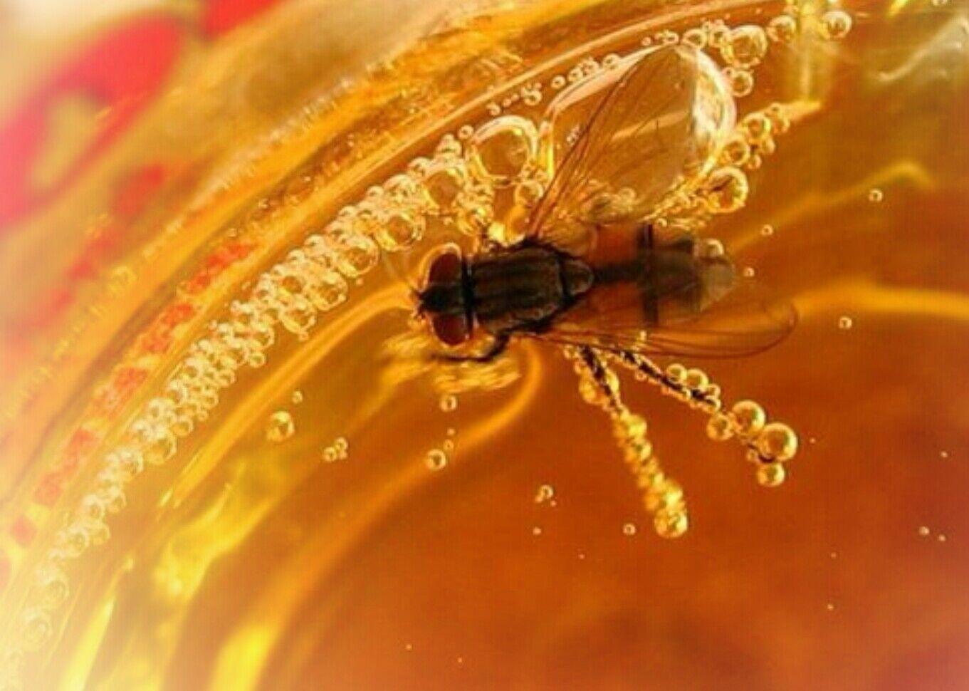 В одном из заведений Запорожской области посетителю подали пиво с мухой