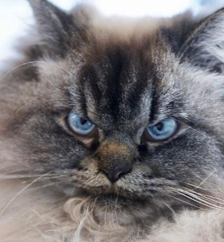Звезда интернета grumpy cat довела телеведущего до истерики.