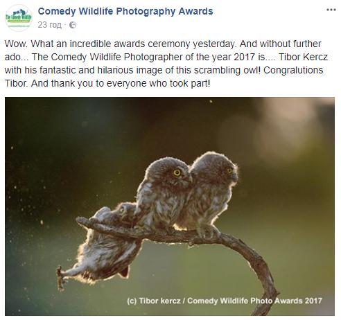 Опубліковані найсмішніші фото дикої природи у 2017 році