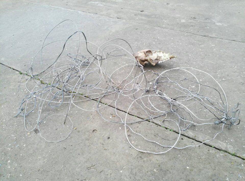 На запорожской Хортице браконьеры расставили десятки ловушек