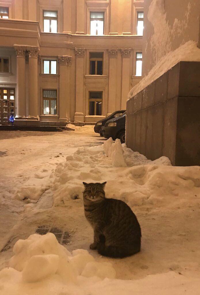 """""""Будет защищать от русокрыс"""": МИД Украины взял на работу кота"""
