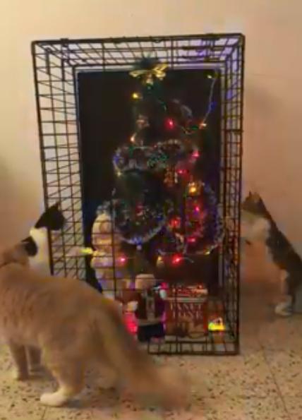 """""""Віддайте кісям!"""" Новорічний лайфхак привів у захват мережу"""